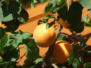 Vers fruit bij chalet