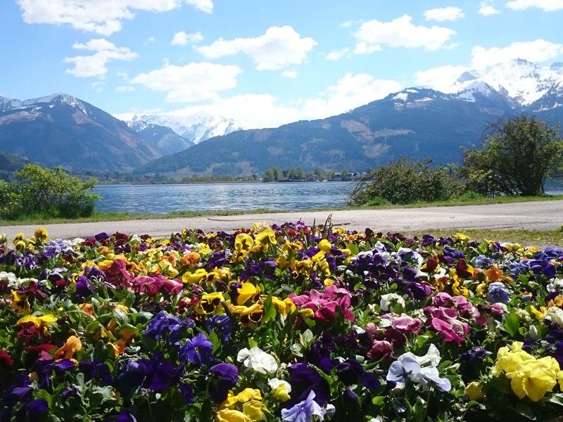 Bloemen en uitzicht omgeving